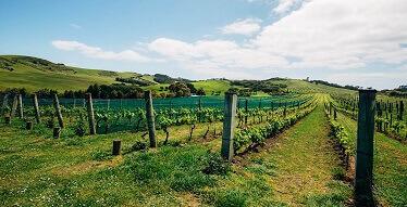 Newzealandbyferry